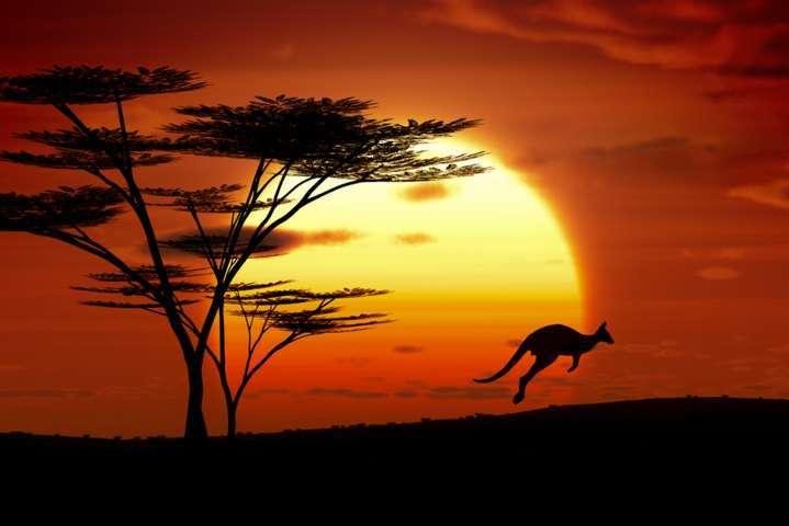 A jumping kangaroo at sunset in Australia