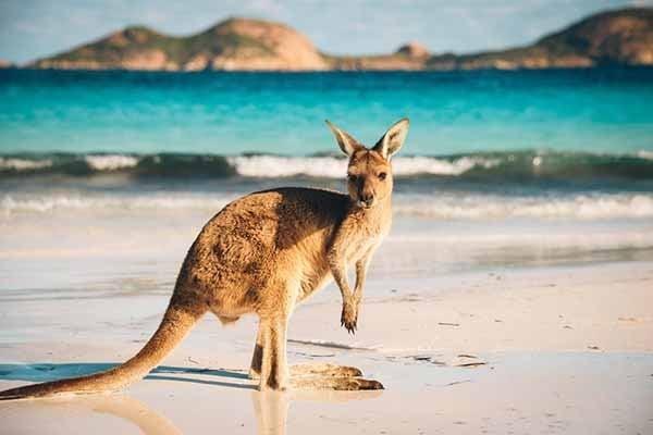 Định cư Úc - Tư vấn Tour du lịch Úc